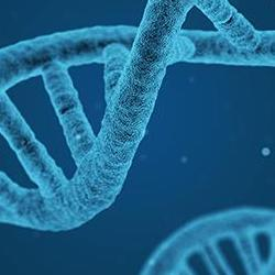 Read more at: Researchers call for greater awareness of unintended consequences of CRISPR gene editing